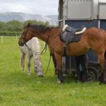 Jouw paarden in een Careliner trailer